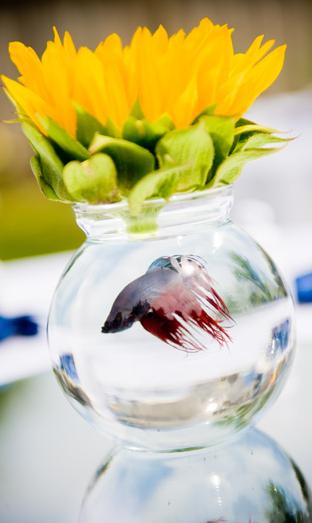 Have goldfish bowls as centerpieces for your wedding for Fish wedding centerpieces