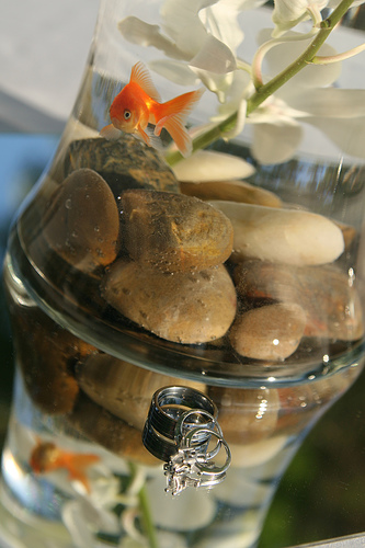 Have goldfish bowls as centerpieces for your wedding