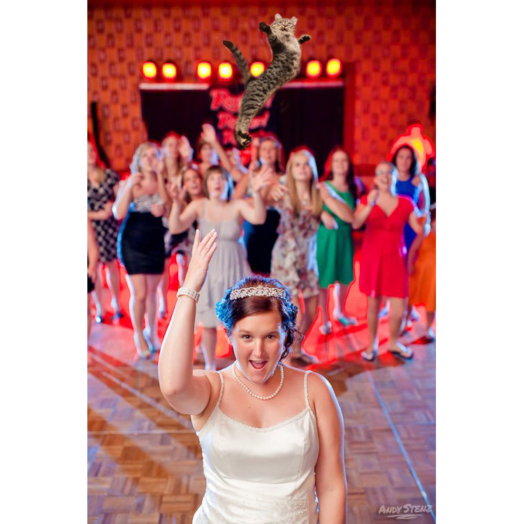 brides throwing cats 1