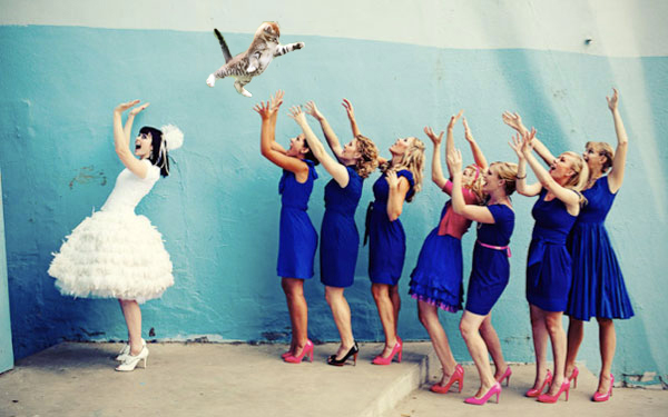 brides throwing cats 2