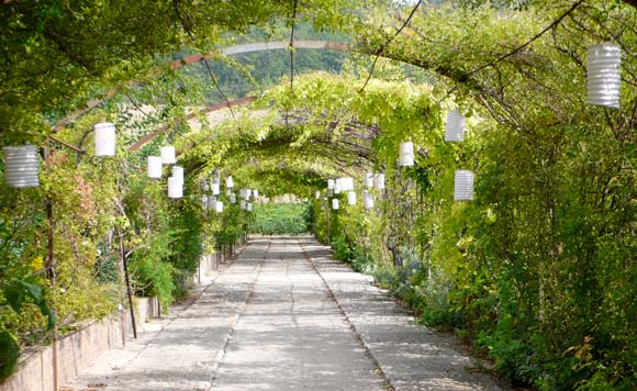 french wedding package in a vineyard (14)
